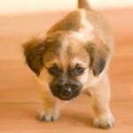 Studie visar att hundägare får mer motion