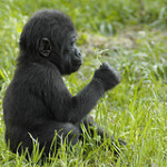 Naturlig mat – Zoo- dieten|vad händer om en människa äter som ett djur?