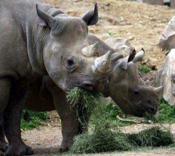 Naturlig mat – Zoo- dieten|vad händer om en människa äter som ett djur? post image