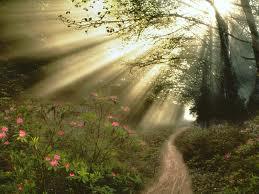 Solen penetrerar en skogsdunge