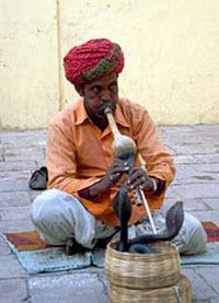Det är en myt att kobran påverkas av musiken