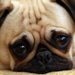 Vad ska man göra om man är deppig? 10 sätt att bli av med depression